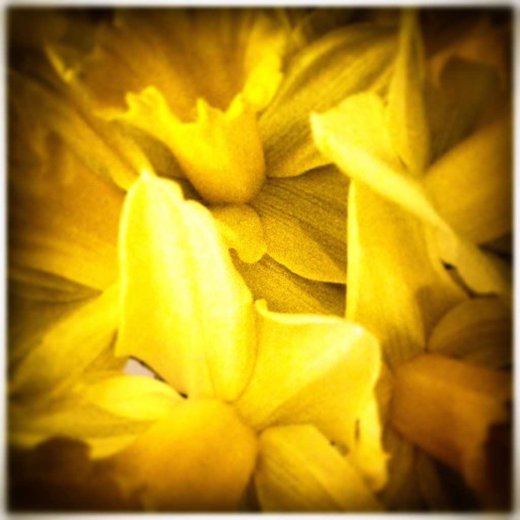 fiddle daffs
