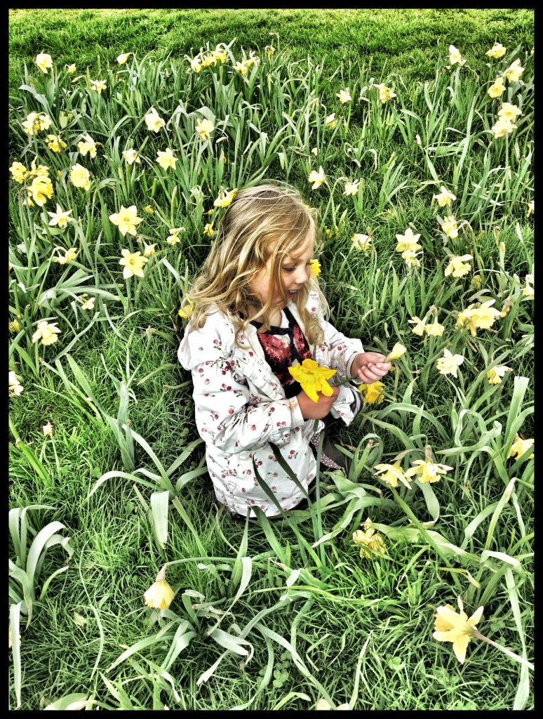 in the daffodils
