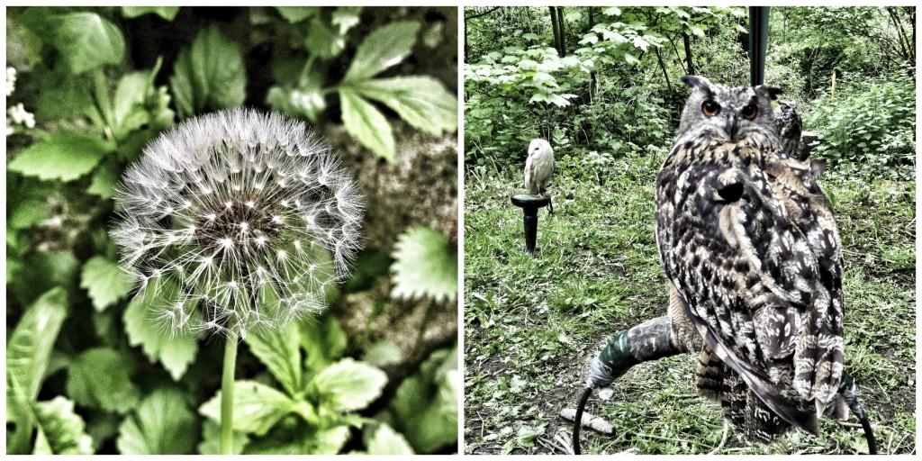 nunhead dandi and owl