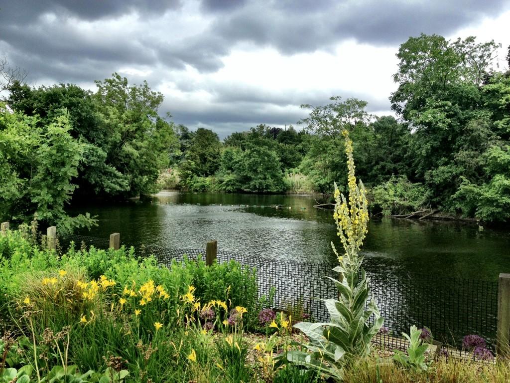 dulwich park lake