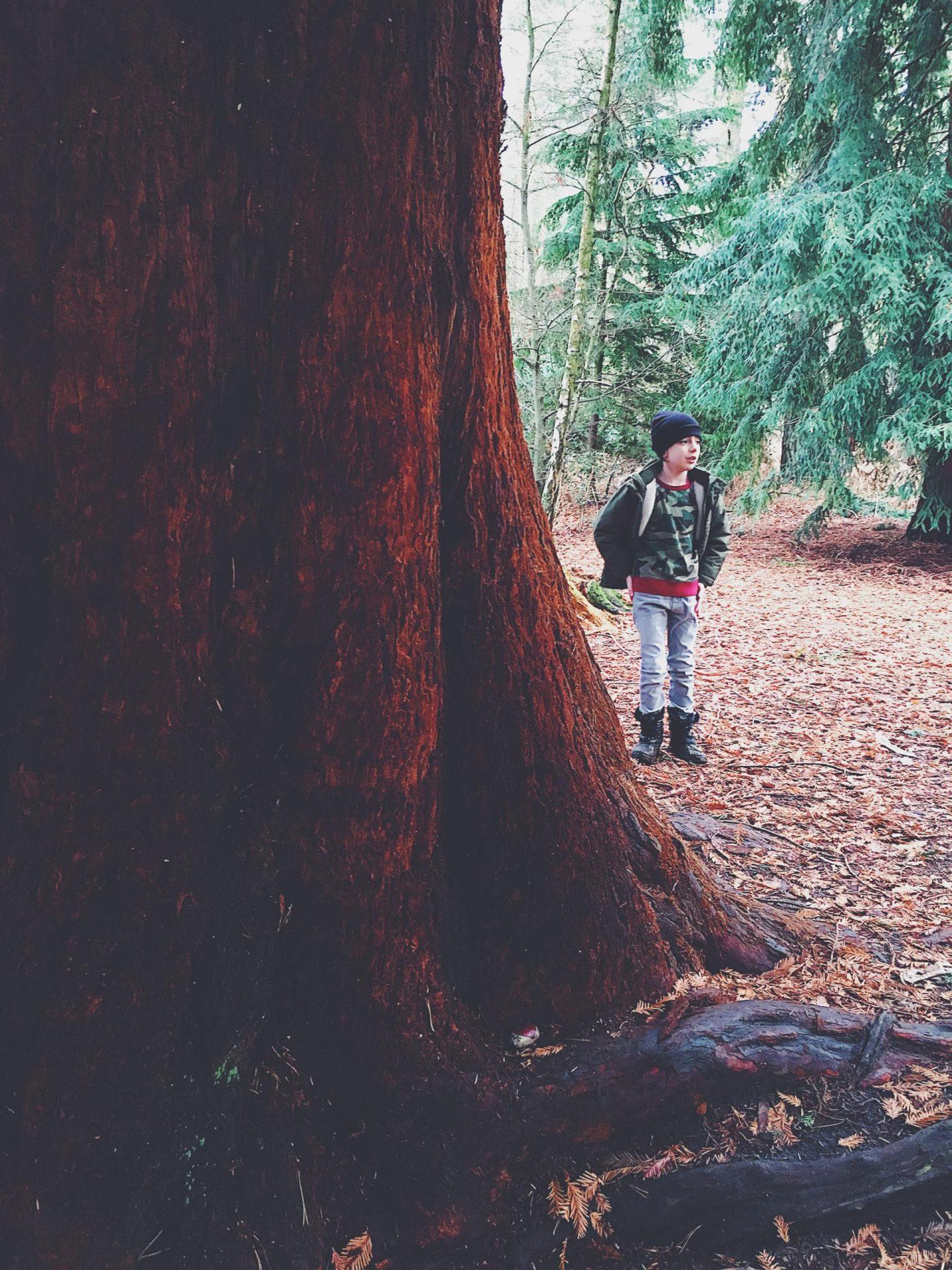 sandringham red furry tree